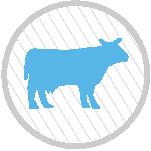 vaca-icono-circulo-de-ganado